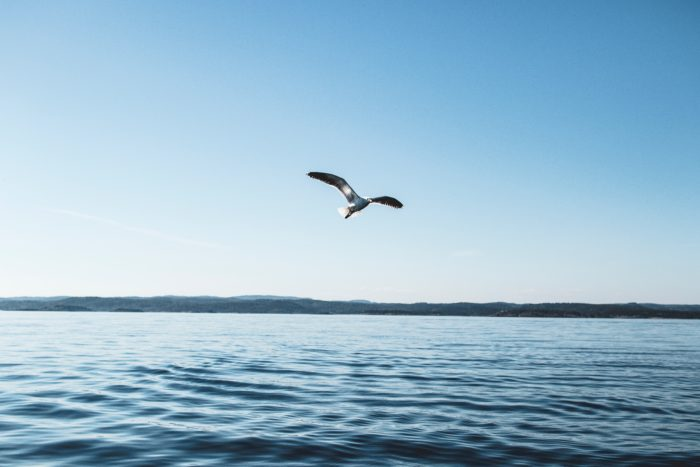 bird soaring over water